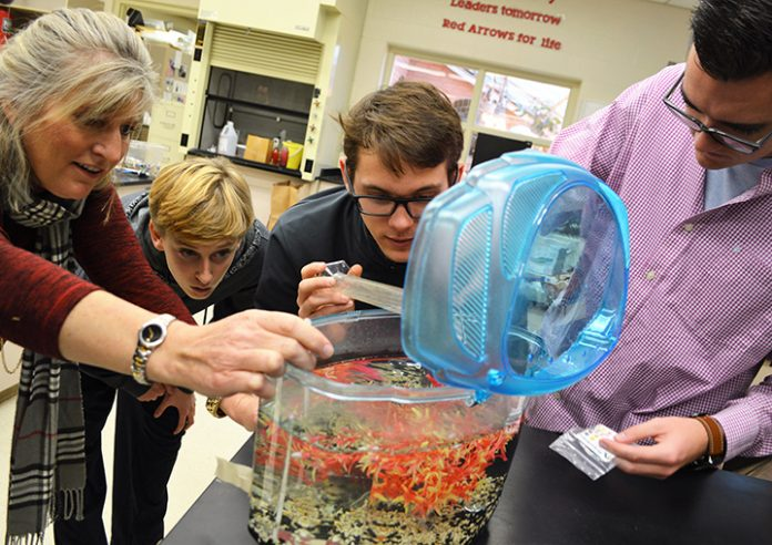 Lowell HIgh science teacher Heather DeJonge checks out one group's tank of daphnia, commonly known as water fleas. Next to DeJonge, from left, are Brenan Conlan, Jacob Nugent and Holt Sawyer
