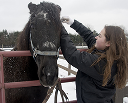 Taylor Jones prepares a horse to bring into the barn and be fed at the Equest Center for Therapeutic Riding