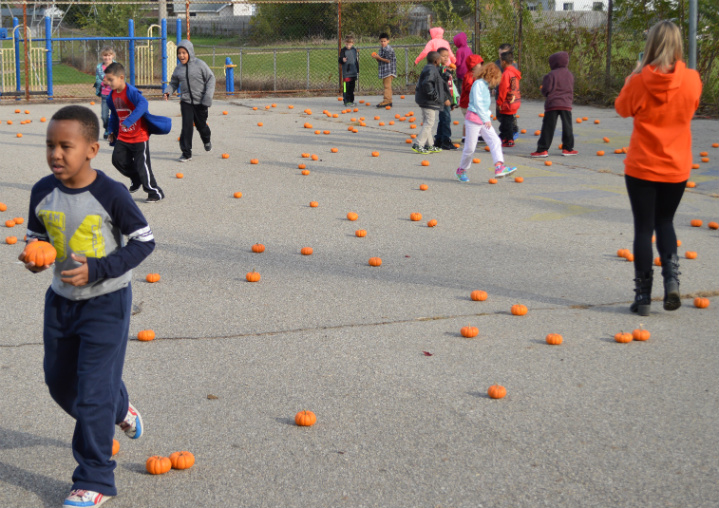 Students look for the perfect mini-pumpkin