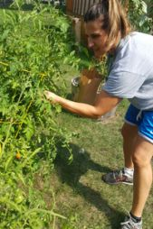 Lee High School science teacher Deb Truszkowski plucks cherry tomatoes