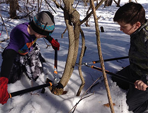 Students Ryan Alexander and Max Harris cutting oriental bittersweet vines