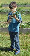 Kelloggsville Regional Center kindergartner Jack Davis eyes a weed