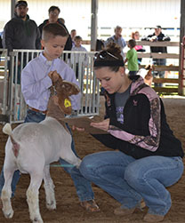 Savannah Hall assists with the Blue & Gold Livestock Show